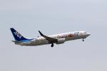 express999さんが、岩国空港で撮影した全日空 737-881の航空フォト(写真)
