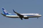 camelliaさんが、成田国際空港で撮影した全日空 737-881の航空フォト(写真)