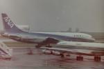 ヒロリンさんが、羽田空港で撮影した全日空 L-1011-385-1 TriStar 1の航空フォト(写真)