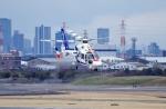 mild lifeさんが、伊丹空港で撮影したオールニッポンヘリコプター AS365N3 Dauphin 2の航空フォト(写真)