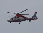 FT51ANさんが、神戸空港で撮影したエアバス・ヘリコプターズ・ジャパン AS365N3 Dauphin 2の航空フォト(写真)