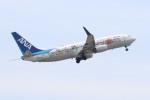 ゆう改めてさんが、岩国空港で撮影した全日空 737-881の航空フォト(写真)
