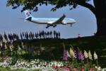 パンダさんが、成田国際空港で撮影した大韓航空 A330-323Xの航空フォト(写真)
