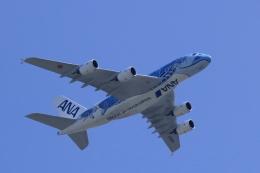yuu@HKD/RJCHさんが、新千歳空港で撮影した全日空 A380-841の航空フォト(飛行機 写真・画像)