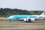 KAZFLYERさんが、成田国際空港で撮影した全日空 A380-841の航空フォト(飛行機 写真・画像)