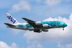 ぱん_くまさんが、成田国際空港で撮影した全日空 A380-841の航空フォト(飛行機 写真・画像)
