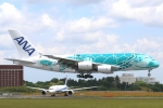 まえちんさんが、成田国際空港で撮影した全日空 A380-841の航空フォト(写真)