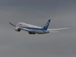 cooperさんが、羽田空港で撮影した全日空 787-8 Dreamlinerの航空フォト(写真)