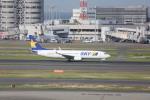 meijeanさんが、羽田空港で撮影したスカイマーク 737-82Yの航空フォト(写真)