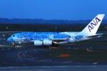 ウッディーさんが、新千歳空港で撮影した全日空 A380-841の航空フォト(写真)