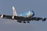 rjccさんが、新千歳空港で撮影した全日空 A380-841の航空フォト(写真)