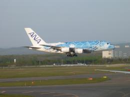 furaibo123さんが、新千歳空港で撮影した全日空 A380-841の航空フォト(飛行機 写真・画像)