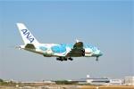 ひこりんさんが、成田国際空港で撮影した全日空 A380-841の航空フォト(写真)