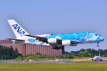 フリューゲルさんが、成田国際空港で撮影した全日空 A380-841の航空フォト(写真)