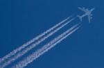 yumeさんが、旭川空港で撮影した全日空 A380-841の航空フォト(写真)