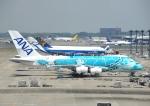 ぼーいんぐ747さんが、成田国際空港で撮影した全日空 A380-841の航空フォト(写真)
