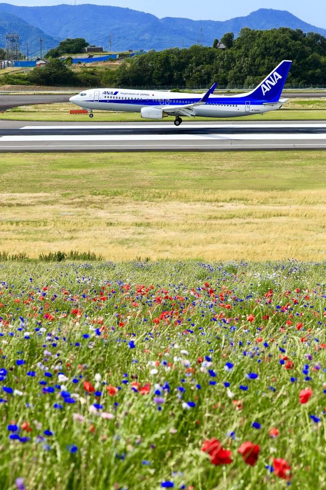 くれないさんが、高松空港で撮影した全日空 737-881の航空フォト(飛行機 写真・画像)
