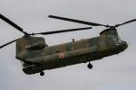 Smyth Newmanさんが、木更津飛行場で撮影した陸上自衛隊 CH-47Jの航空フォト(写真)