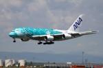 北の熊さんが、新千歳空港で撮影した全日空 A380-841の航空フォト(写真)