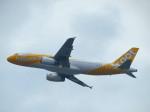 た~きゅんさんが、関西国際空港で撮影したスクート A320-232の航空フォト(写真)