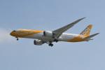 kuro2059さんが、台湾桃園国際空港で撮影したスクート 787-9の航空フォト(写真)