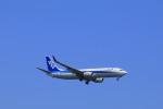 しかばねさんが、羽田空港で撮影した全日空 737-881の航空フォト(写真)