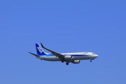 しかばねさんが、羽田空港で撮影した全日空 737-881の航空フォト(飛行機 写真・画像)