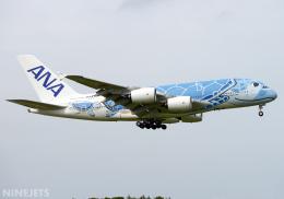NINEJETSさんが、成田国際空港で撮影した全日空 A380-841の航空フォト(飛行機 写真・画像)