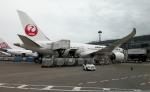 CL&CLさんが、成田国際空港で撮影した日本航空 787-8 Dreamlinerの航空フォト(写真)