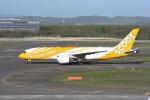 kumagorouさんが、新千歳空港で撮影したスクート 787-8 Dreamlinerの航空フォト(写真)