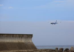 タミーさんが、徳島空港で撮影した全日空 737-881の航空フォト(飛行機 写真・画像)