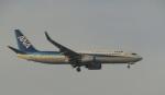 commet7575さんが、福岡空港で撮影した全日空 737-881の航空フォト(写真)