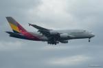 みなかもさんが、成田国際空港で撮影したアシアナ航空 A380-841の航空フォト(写真)