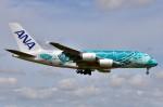 ちかぼーさんが、成田国際空港で撮影した全日空 A380-841の航空フォト(写真)