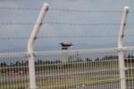 デウスーラ294さんが、小松空港で撮影した航空自衛隊 F-15DJ Eagleの航空フォト(写真)