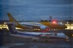 tamtam3839さんが、新千歳空港で撮影したスクート (〜2017) 787-8 Dreamlinerの航空フォト(写真)