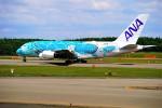 hidetsuguさんが、新千歳空港で撮影した全日空 A380-841の航空フォト(写真)