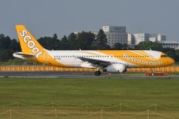 tassさんが、成田国際空港で撮影したスクート A320-232の航空フォト(写真)