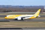 kuro2059さんが、新千歳空港で撮影したスクート 787-8 Dreamlinerの航空フォト(写真)