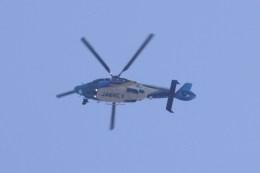 けいとパパさんが、調布飛行場で撮影した東邦航空 EC155Bの航空フォト(飛行機 写真・画像)