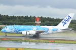 cassiopeiaさんが、成田国際空港で撮影した全日空 A380-841の航空フォト(写真)