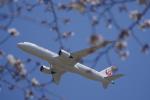 リンリンさんが、成田国際空港で撮影した日本航空 787-9の航空フォト(写真)