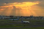 ☆ライダーさんが、羽田空港で撮影した全日空 787-8 Dreamlinerの航空フォト(写真)