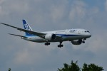 おかめさんが、成田国際空港で撮影した全日空 787-8 Dreamlinerの航空フォト(写真)