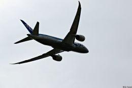 Jin Bergqiさんが、伊丹空港で撮影した全日空 787-8 Dreamlinerの航空フォト(写真)