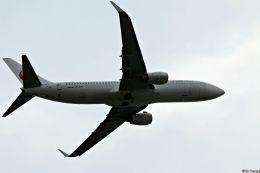 Jin Bergqiさんが、伊丹空港で撮影した日本航空 737-846の航空フォト(写真)