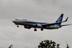344さんが、伊丹空港で撮影した全日空 737-881の航空フォト(写真)