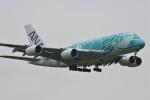 ドラパチさんが、成田国際空港で撮影した全日空 A380-841の航空フォト(写真)