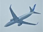 いねねさんが、中部国際空港で撮影した全日空 737-881の航空フォト(写真)