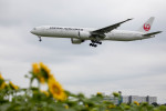 BENKIMAN-ENLさんが、成田国際空港で撮影した日本航空 777-346/ERの航空フォト(写真)